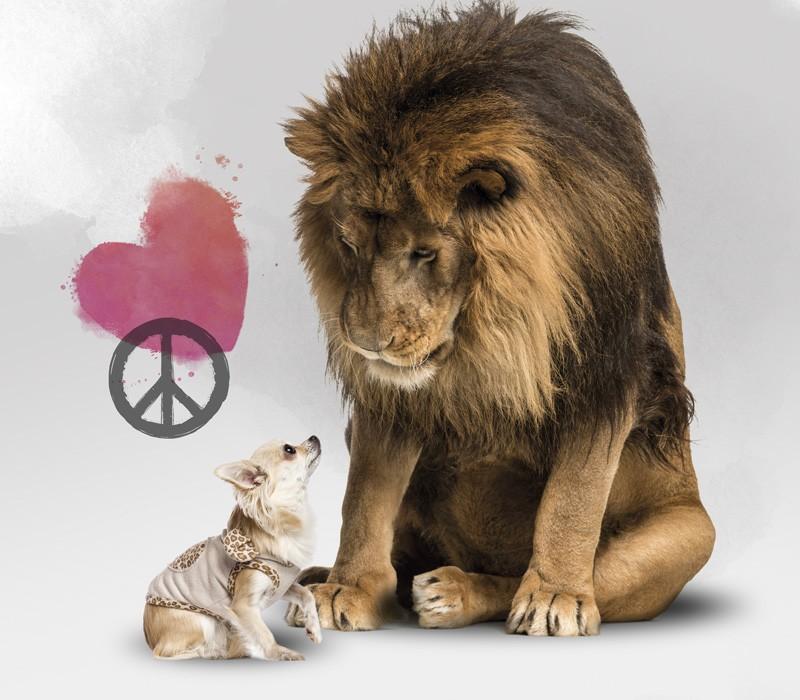 Fique de Bem com o Leão: 10 Dicas Para Não Errar no IRPF 2019